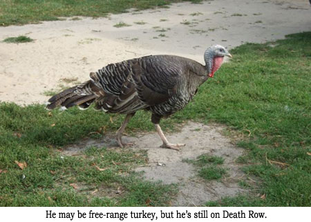 free-range-turkey.jpg
