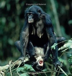 monkeylove.jpg
